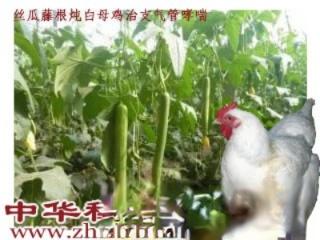 丝瓜藤根炖白母鸡,治支气管哮喘5剂可愈