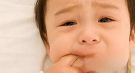 小孩蛀牙睡不着,海桐皮止痛有一套