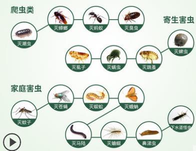 家里有虫怎么办,有什么驱虫办法