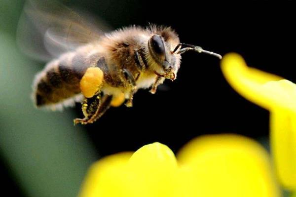 被蚂蟥、蝎子、蜜蜂、蜘蛛叮蜇怎么处理