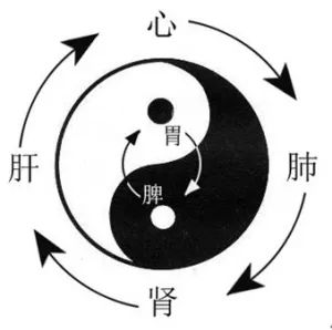 张仲景唯一的减肥方:2味药当茶喝,能养脾胃能减肥!